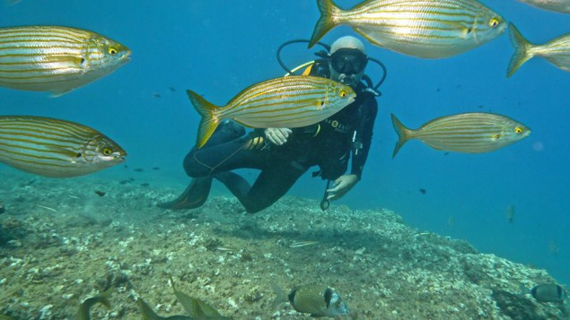 Buceo Submares